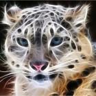 Голубоглазый тигр?