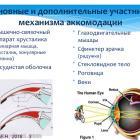 Accommodation of the eye. Ответ на вопрос: существует ли аккомодация глаза вдаль? Доклад проф. Иомдиной Е.Н. Портал Орган зрения organum-visus.ru