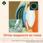 Отток внутриглазной жидкости. Новости оaтальмологии портала Орган зрения organum-visus.com