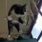 Взгляд кота-эквилибриста.