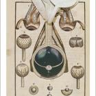Анатомия глаза. Иллюстрации первой книги по офтальмологии Георга Бартиша (XVI в.). Strange Eyes. Источник: imagecache6.allposters