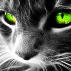 Green cat!