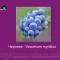 News Blueberry. Портал Орган зрения organum-visus.com